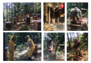 Miel, alimentos y preservación